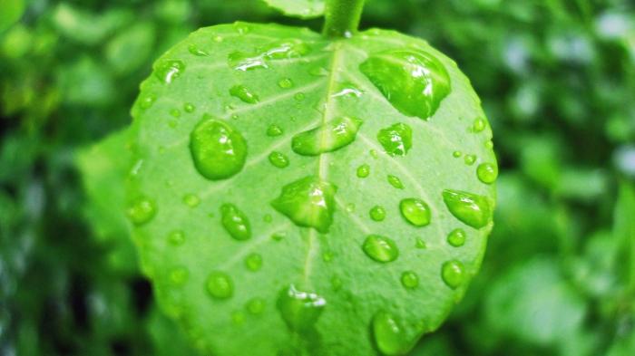 Rain on Leaf 5b