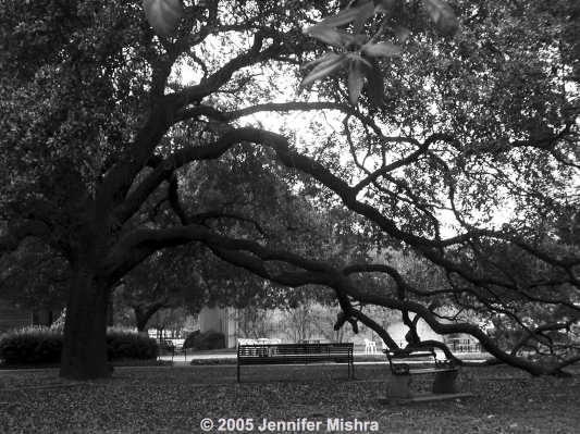 Sam Houston Park Tree watermarked