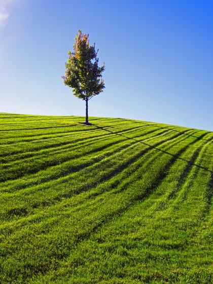 Tree & Grass 1b