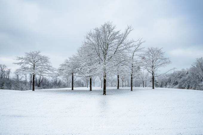 Photo Trees in Snow