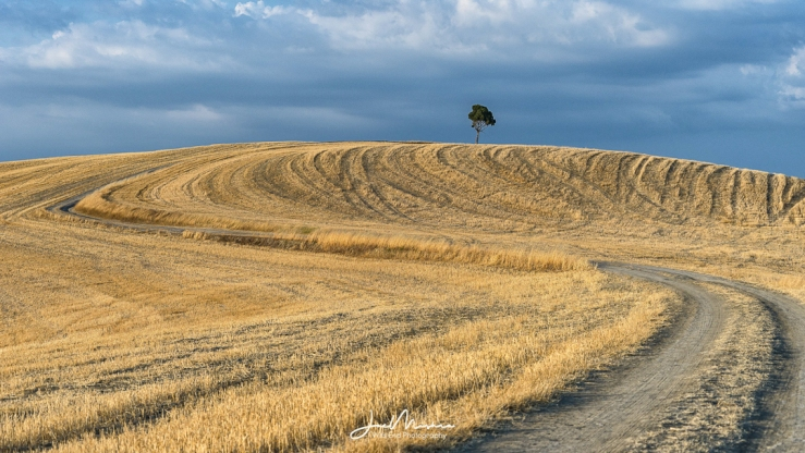 Photo Solitary Tree