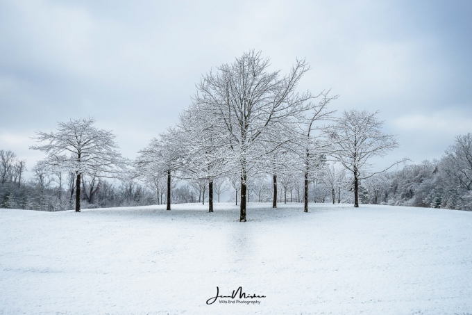 Trees in Snow 1