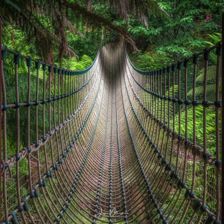 Photo Rope Bridge