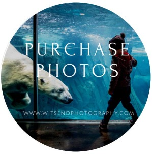 Purchase Photos copy