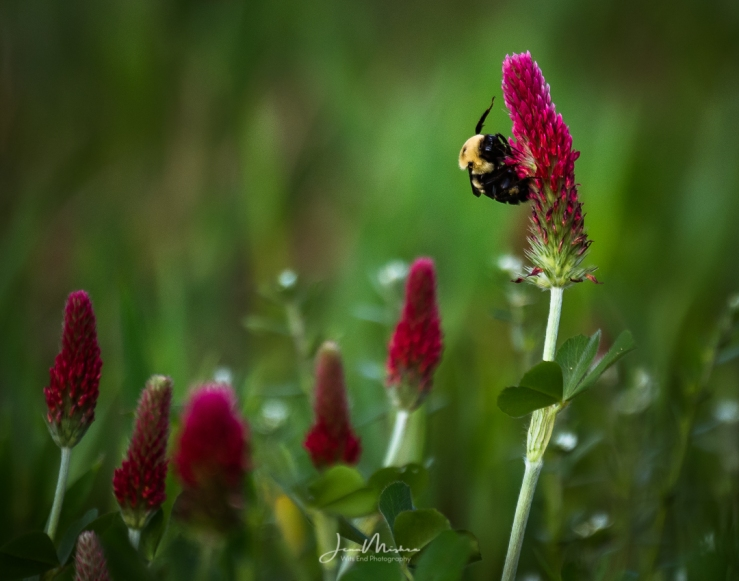 Photo Spring Fling
