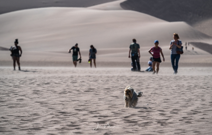 Photo Dog on the Dunes