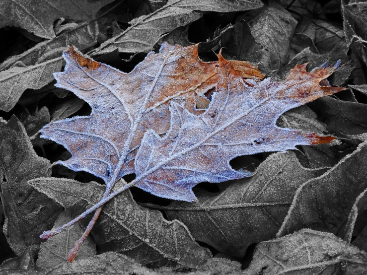 Photo Frosty Leaves