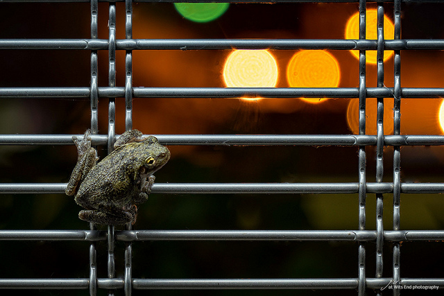 Photo Evening Toad
