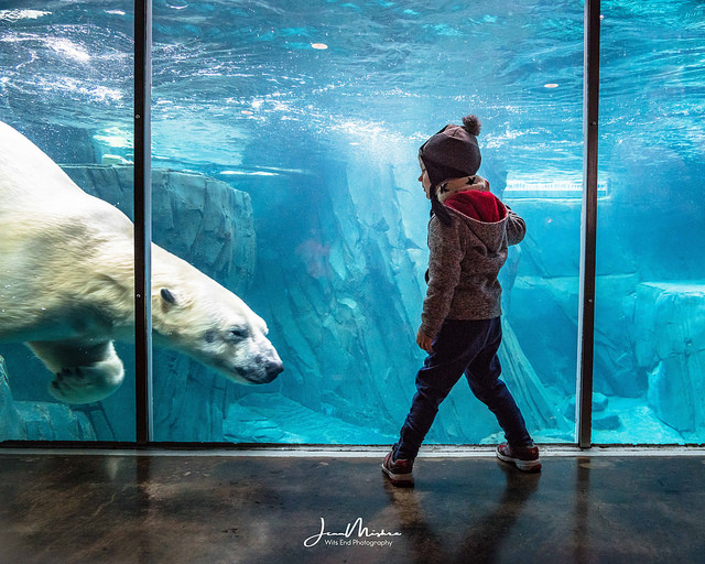 Photo A Day at the Zoo: Polar Bear Cometh