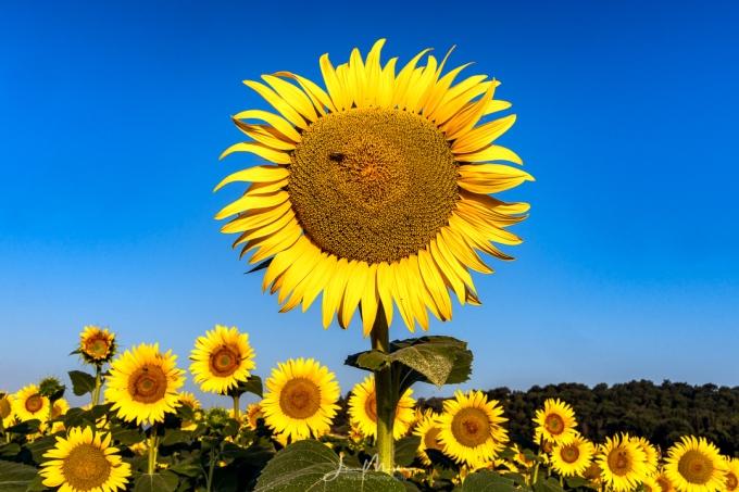 Photo Bright Sunny Morning