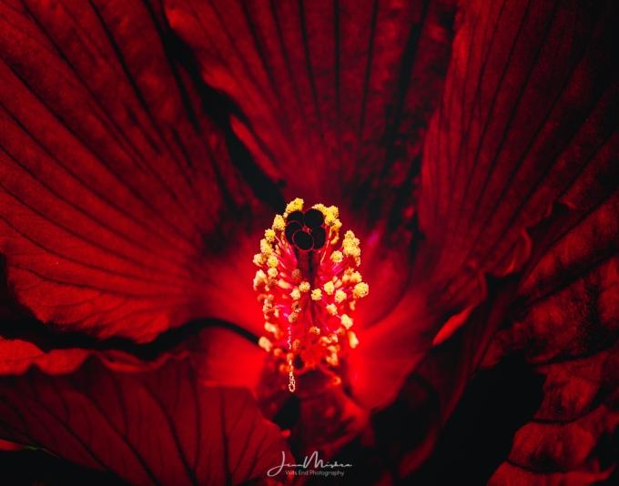 Photo Deep Red