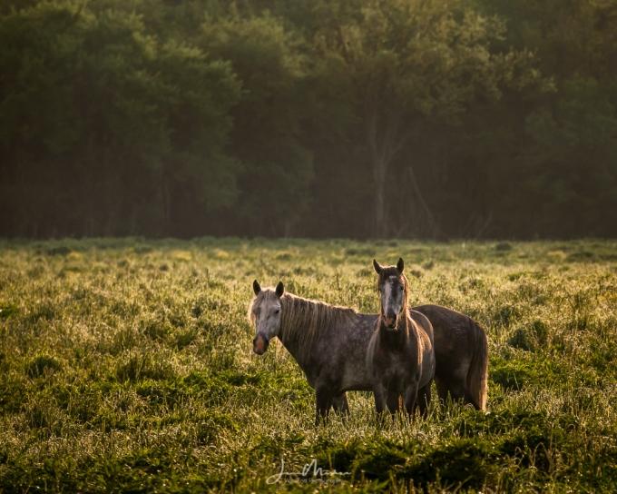 Photo Wild horses at Sunset