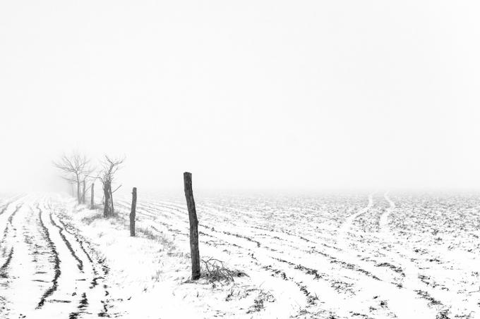 Foggy Winter Morning 11 Web-2
