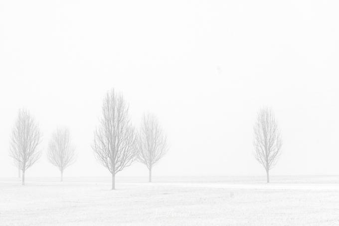 Foggy Winter Morning 9 Web