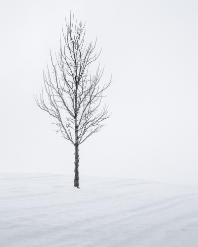 Simply Snowy Tree