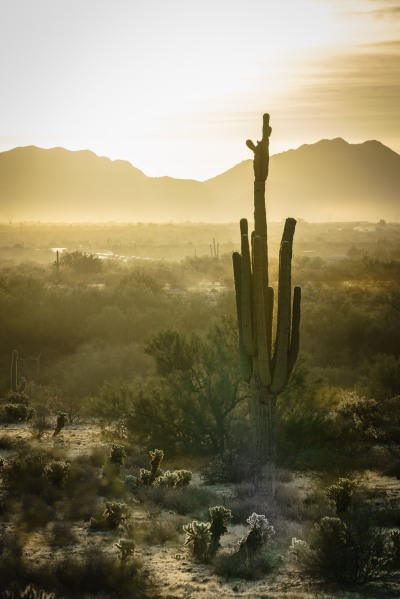 Photo Saguaro Cactus near Phoenix