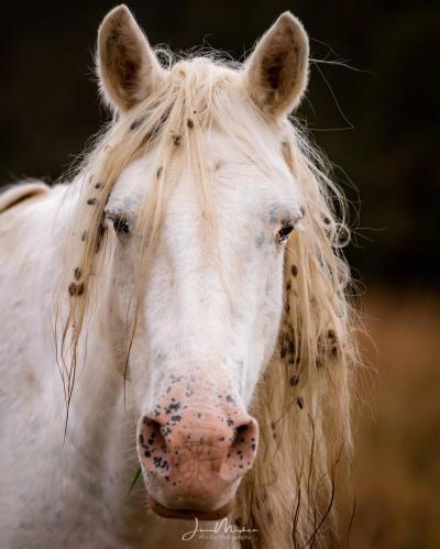 Portrait of wild horse in Missouri Ozarks