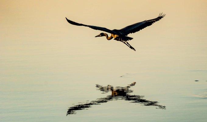 Weekly Photo Challenge: FeatheredFriends